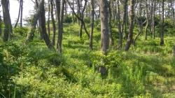 아름다운 숲으로 지정된 관매도 해변솔밭